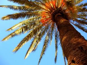 Tree in Spain
